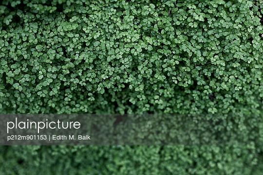 Zart Blätter - p212m901153 von Edith M. Balk