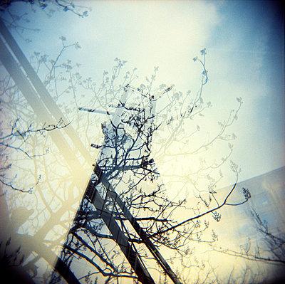 Zweige und Gebäude - p5679756 von Christophe Boete