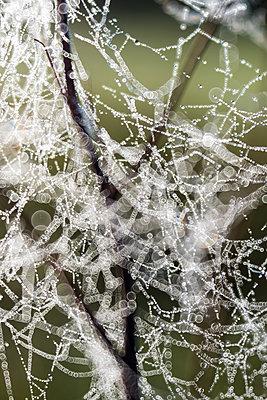Autumn cobweb - p739m1487196 by Baertels