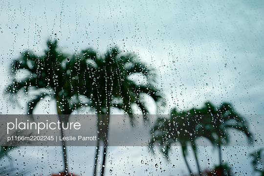 Palm trees behind window during rain - p1166m2202245 by Leslie Parrott