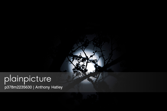 Full moon - p378m2235630 by Anthony Hatley