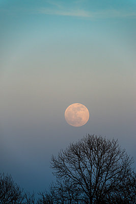 Surreal full moon rise in a delicate sky above bare trees. - p1433m1589991 by Wolf Kettler