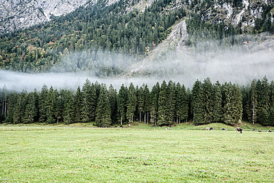 Waldgebiet in Oberstdorf - Rappenseehütte - p741m2082784 von Christof Mattes