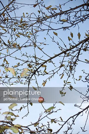 Apple tree - p0750306 by Lukasz Chrobok