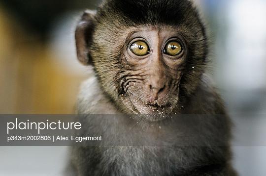 p343m2002806 von Alex Eggermont