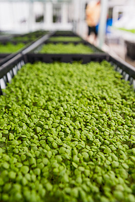 Bins of green plants in greenhouse - p555m1305378 by Mark Edward Atkinson/Tracey Lee