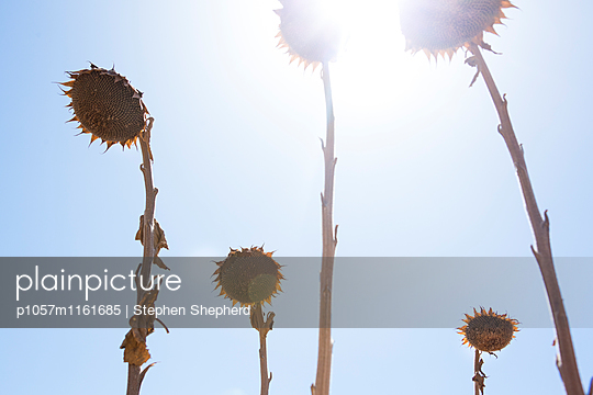 Hitze - p1057m1161685 von Stephen Shepherd