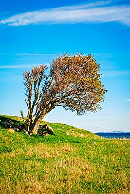 Tree by the sea - p382m2283257 by Anna Matzen