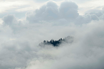 Mountain forest in the fog, Pinzgau - p961m2211695 by Mario Monaco