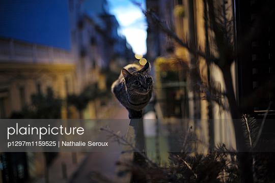 p1297m1159525 von Nathalie Seroux
