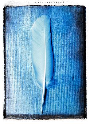 Vogelfeder - p451m1119122 von Anja Weber-Decker
