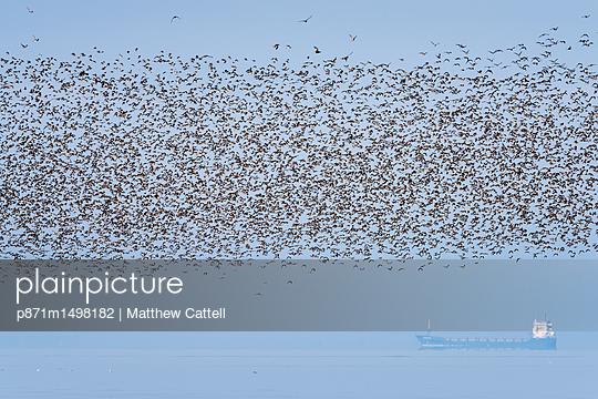 p871m1498182 von Matthew Cattell