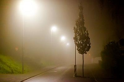 Straßenbaum im Nebel - p979m1513290 von Martin Kosa
