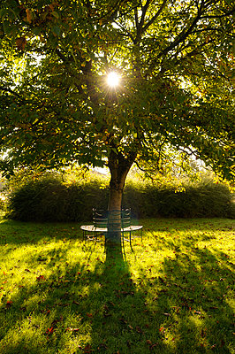 Walnut tree - p470m954744 by Ingrid Michel