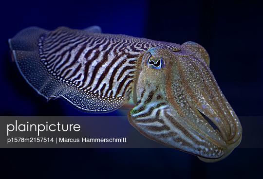 Sepia - p1578m2157514 von Marcus Hammerschmitt