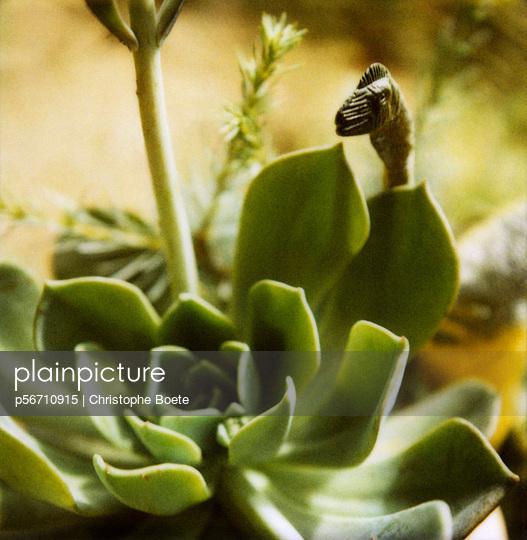 Hidden dinosaur - p56710915 by Christophe Boete