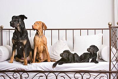 Dog family - p5730283 by Birgid Allig