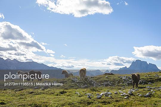 Ponys in den Dolomiten, Trentino, Belluno - p1273m1198515 von melanka