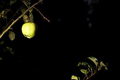 Apfel in der Nacht - p5861389 von Kniel Synnatzschke