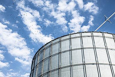 Birds flying near silo - p555m1523000 by John Fedele