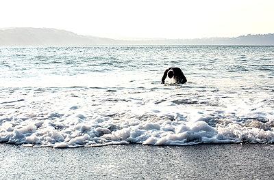 man with wetsuit in ocean near SF - p1166m2152147 by Cavan Images