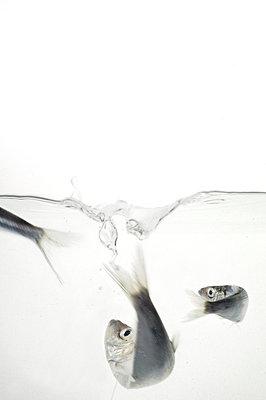 Fish in aquarium - p3225003 by Krista Keltanen