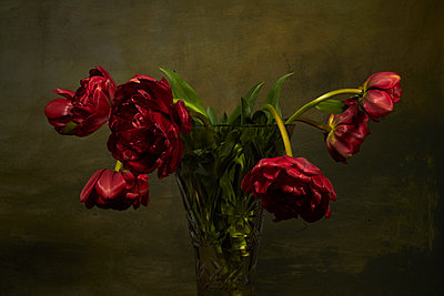 Withered bunch of tulips in crystal vase - p1312m2272143 by Axel Killian
