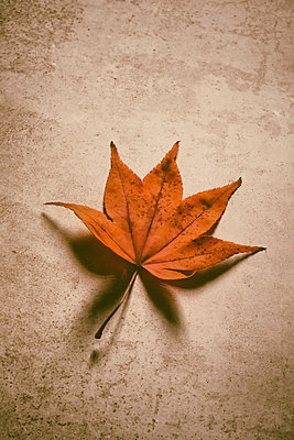 Still life of autumnal leaf on speckled background - p597m2220257 by Tim Robinson