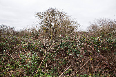 Wild hedgerow - p1047m1016234 by Sally Mundy