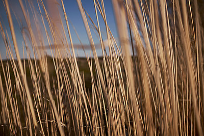 Reed - p913m2134276 by LPF