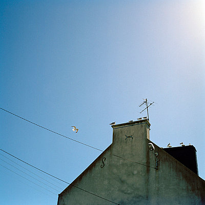 Dach - p949m757987 von Frauke Schumann