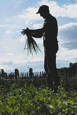 Farmer standing in a field holding freshly picked spring onions. - p1100m2271493 by Mint Images