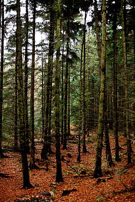Wald - p2370471 von Thordis Rüggeberg