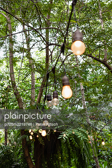 Thailand, Fairy lights in front of tropical forest - p728m2219746 by Peter Nitsch
