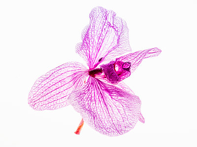 Orchid flower - p401m2193037 by Frank Baquet