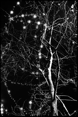 Fairy lights in a tree - p9510038 by Caterina Sansone