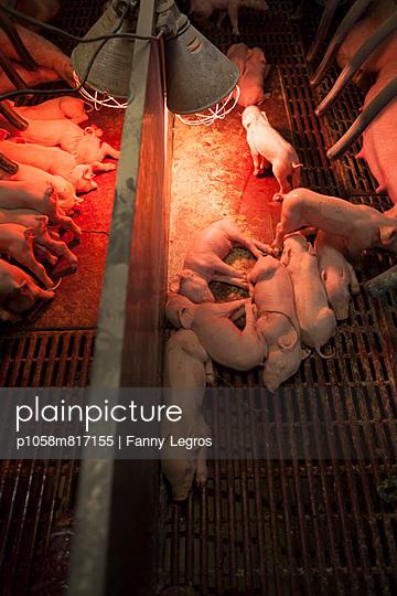 Tierhaltung - p1058m817155 von Fanny Legros