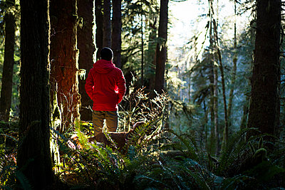 Rear view of hiker with Golden Retriever walking at forest - p1166m1485241 by Cavan Images