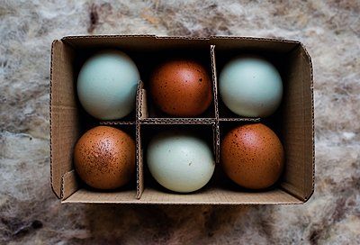 duck egg and brown coloured eggs in a cardboard recyclable box - p1166m2246938 by Cavan Images