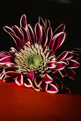 Exotische Blume - p1628m2230112 von Lorraine Fitch