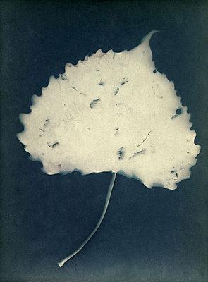 Leaf - p945m2163778 by aurelia frey