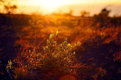Morgenröte, Volcanoes-Nationalpark - p1196m1000677 von Biederbick & Rumpf