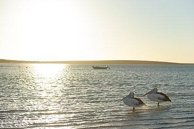 Meerlandschaft mit Pelikanen - p1273m1110950 von melanka