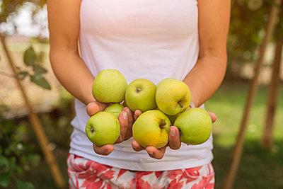 Woman holding harvested apples - p300m2060471 by JLPfeifer