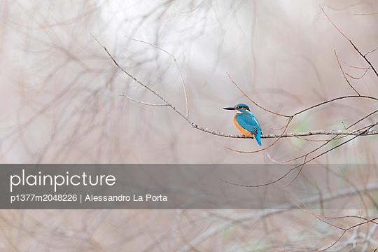 p1377m2048226 von Alessandro La Porta