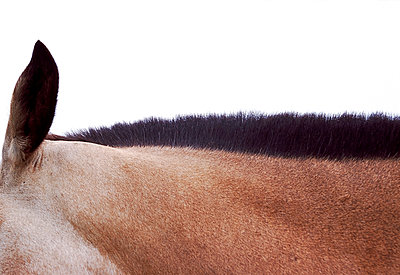 Horse mane - p1125m917374 by jonlove