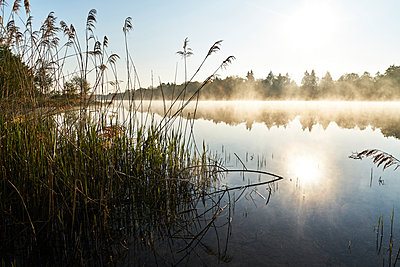 Reeds on the lakeshore - p1312m2275841 by Axel Killian