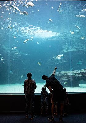 Two Oceans Aquarium, visitors marvel at sea animals - p1640m2246233 by Holly & John