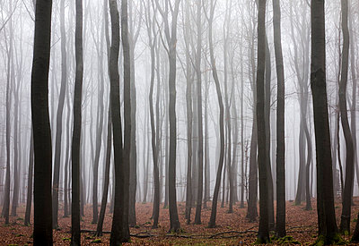 Germany, Hesse, fog in the nature park Taunus - p300m911122f by Andreas Tabbert