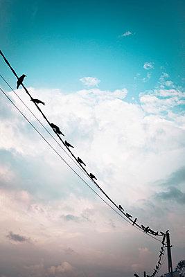 Krähen auf Stromleitung - p795m1045277 von Janklein